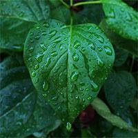 udine-quando-piove