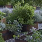giardinostucky1